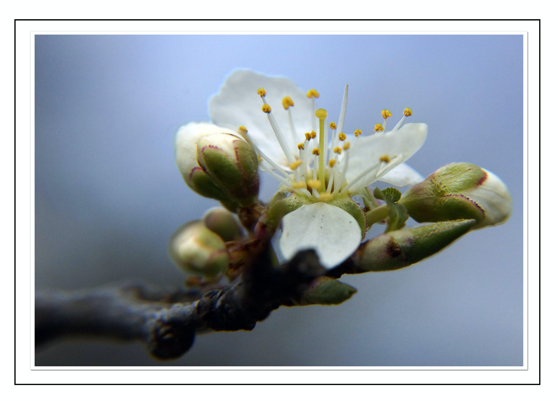 Free stock photo of blue, sun, spring, tree