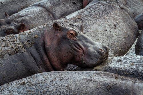 Brown Animal Lying on Gray Rock
