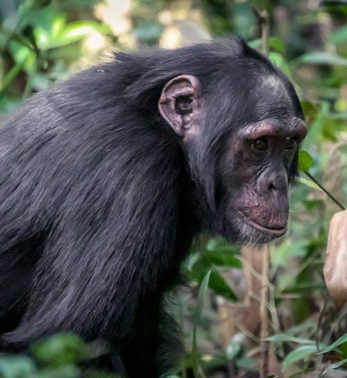 Free stock photo of uganda