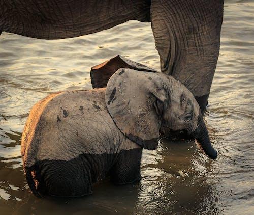 Elephant on Water