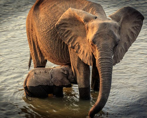 Elephant Drinking Water on Water