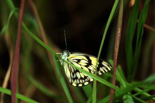 Free stock photo of butterfly insect, nature, south africa