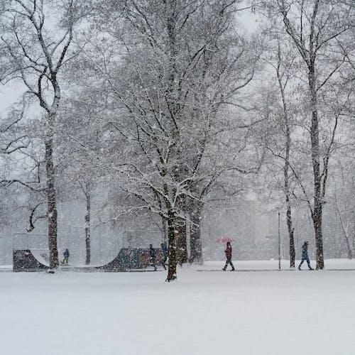 Free stock photo of park, regenschirm, schnee
