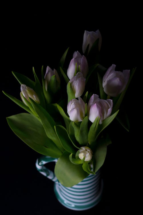 Purple and White Tulips in Clear Glass Vase