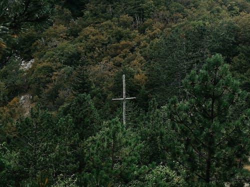 Photos gratuites de amour, bosco, croix