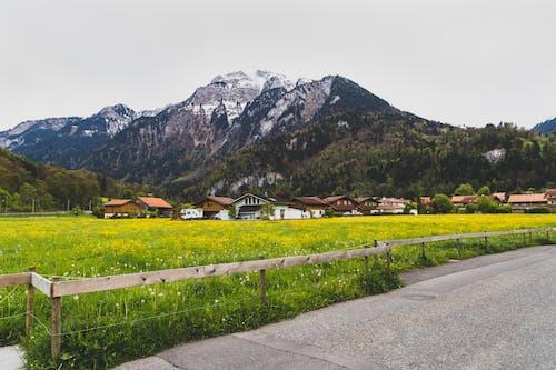 Δωρεάν στοκ φωτογραφιών με βουνό, γεωργία, γήπεδο, γρασίδι