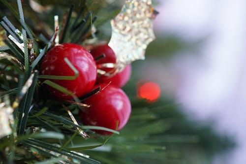 Gratis arkivbilde med baller, farger, grønn, jul