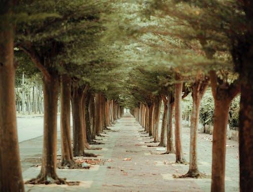 Kostenloses Stock Foto zu bäume, beratung, fußweg, holz