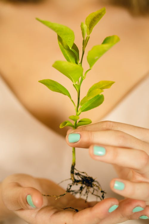 Person Holding Green Plant in Close Up Photography