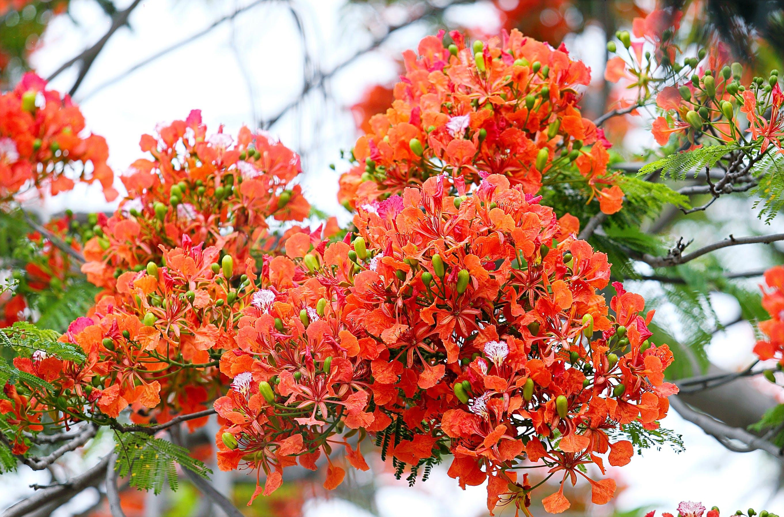 Shallow Focus Photography of Orange Flowers