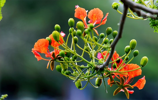 Focus Photography of Orange and Green Flowers