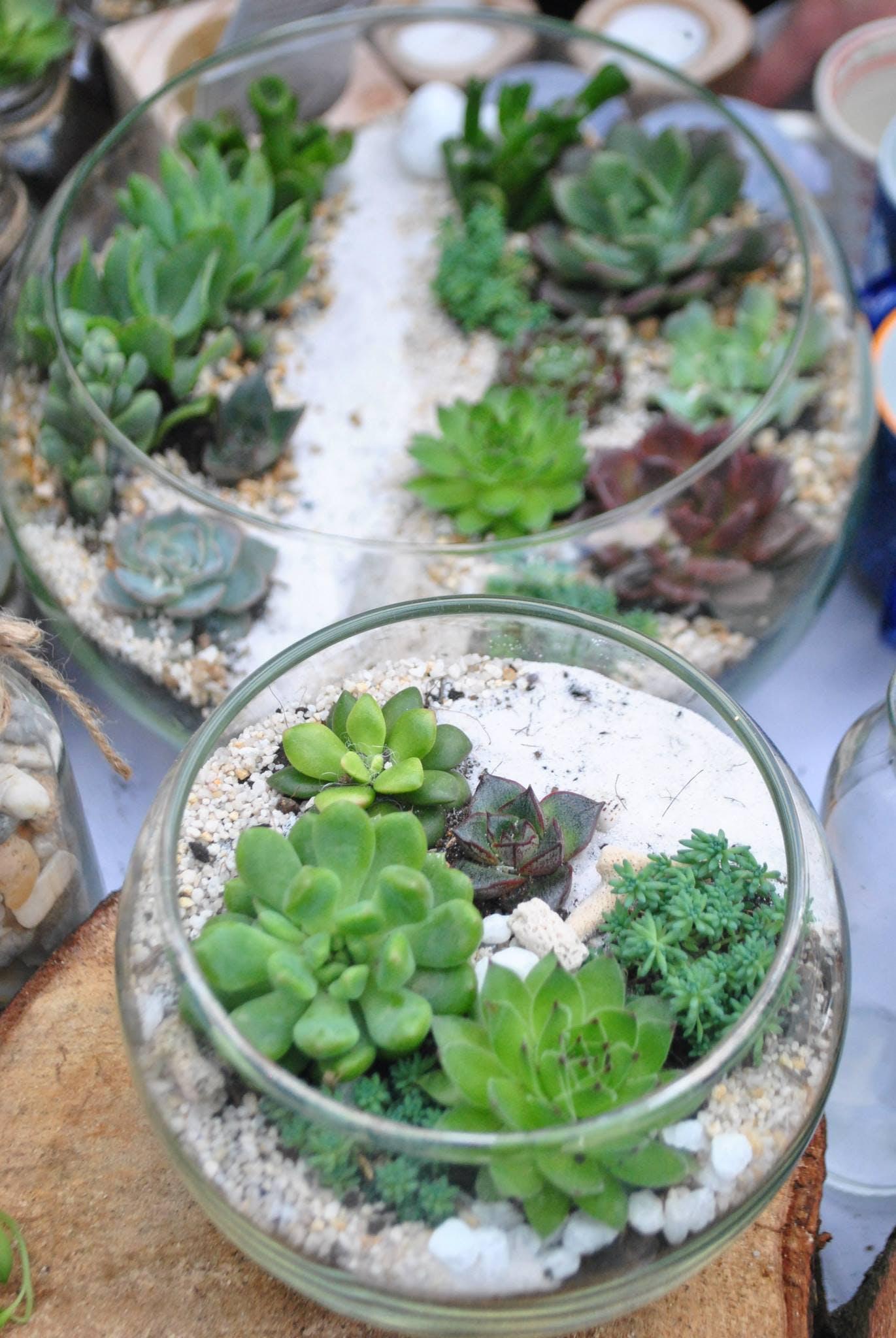 Free stock photo of Secret Garden, succulent plants, terrarium