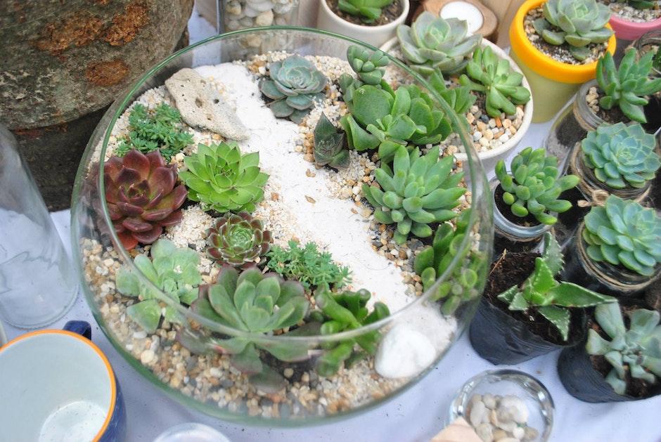 path way, succulent, terrarium