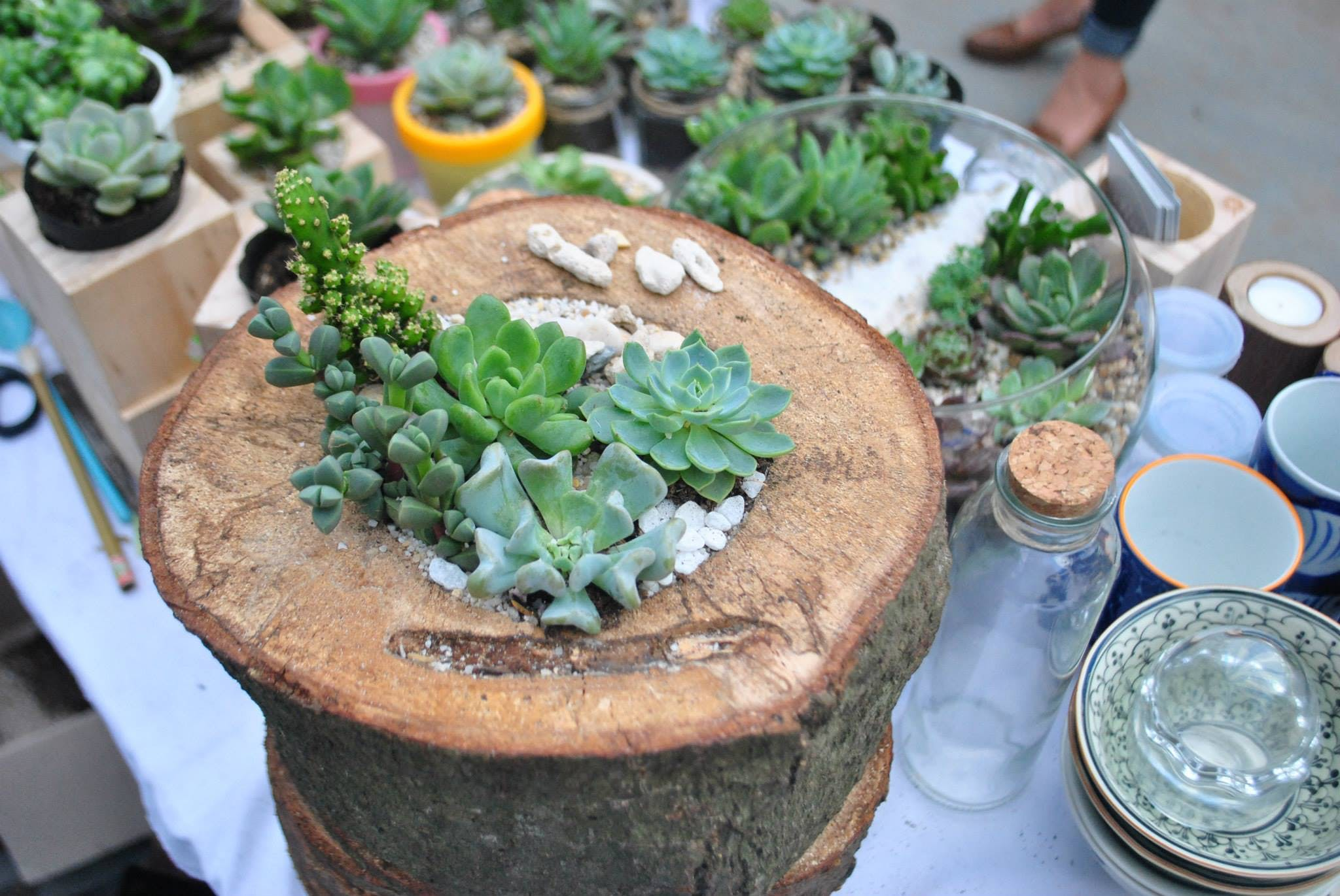 Free stock photo of succulent plants, terrarium, wood planter
