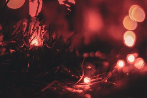 Imagine de stoc gratuită din ajun, aspect, beculețe de crăciun, culori