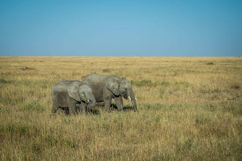 Elephants on a Grass Field