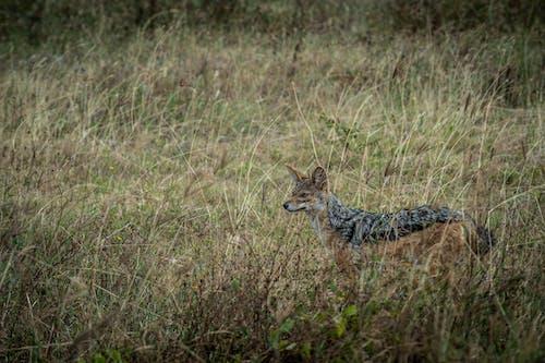 Free stock photo of african wildlife, animal, barbaric