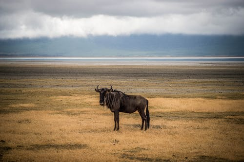 Brown Horse on Brown Field
