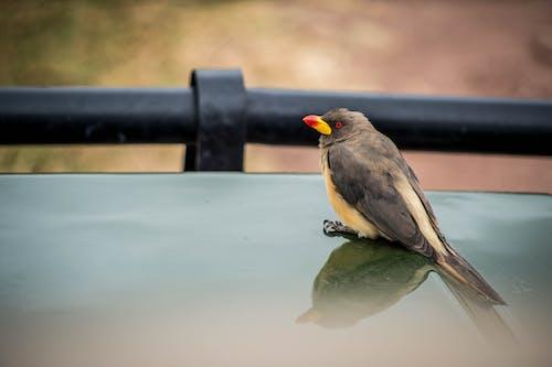 Free stock photo of african wildlife, birds, ngorongoro crater