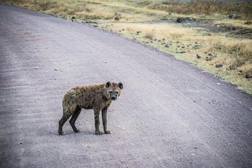 Free stock photo of africa, african wildlife, animal