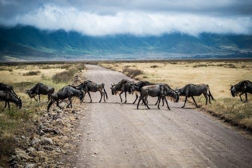 Free stock photo of africa, animal, antelope