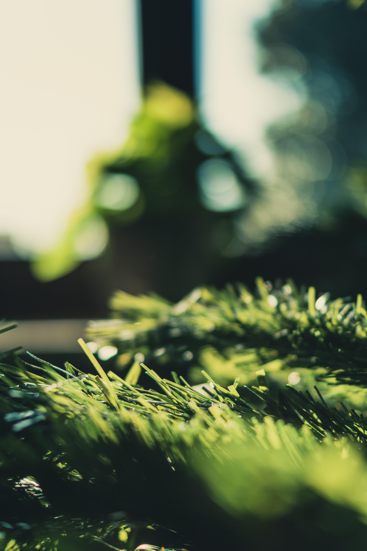 açık, ağaç, bulanıklık, büyüme içeren Ücretsiz stok fotoğraf