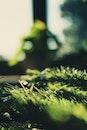 light, blur, tree