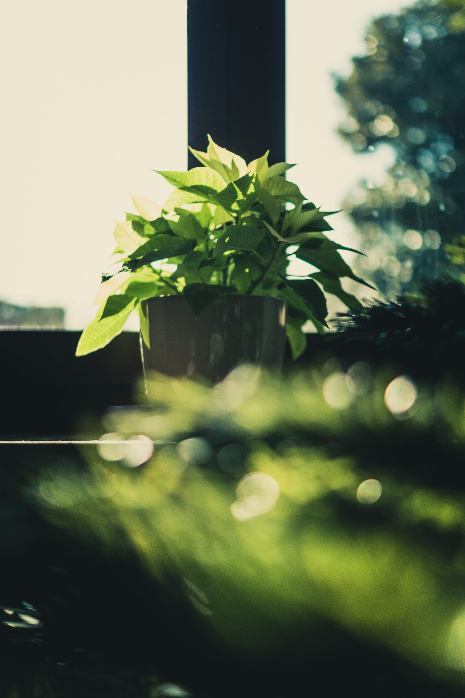 Green Leaf Plant on Brown Wooden Pot