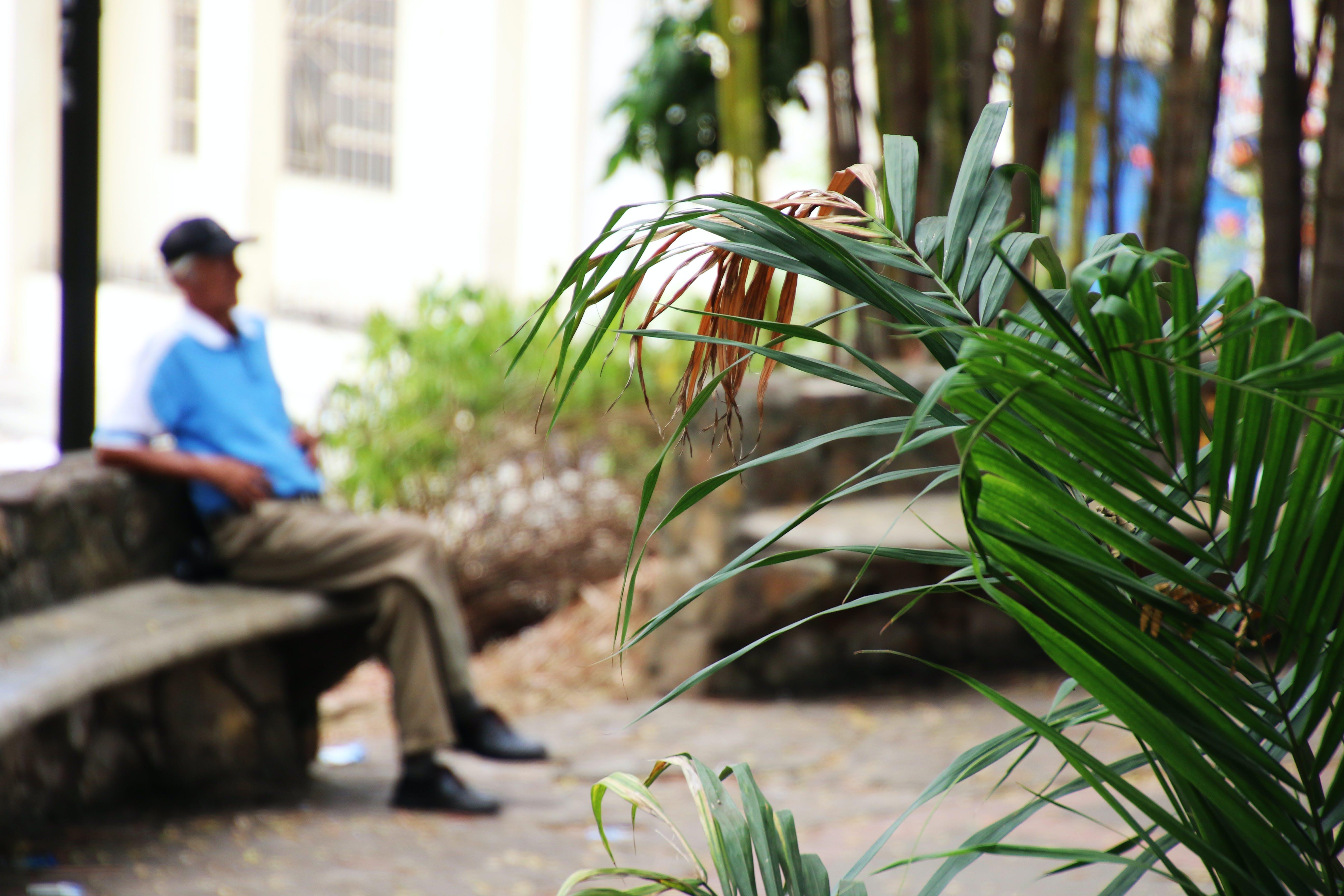 Free stock photo of bench, man, blue, garden