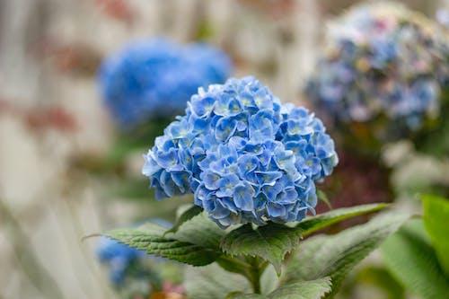 Photos gratuites de bleu, bouquet, bouquet de fleurs