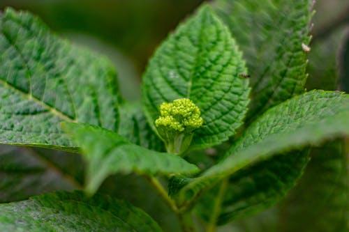 Imagine de stoc gratuită din aproape, buchet, floare