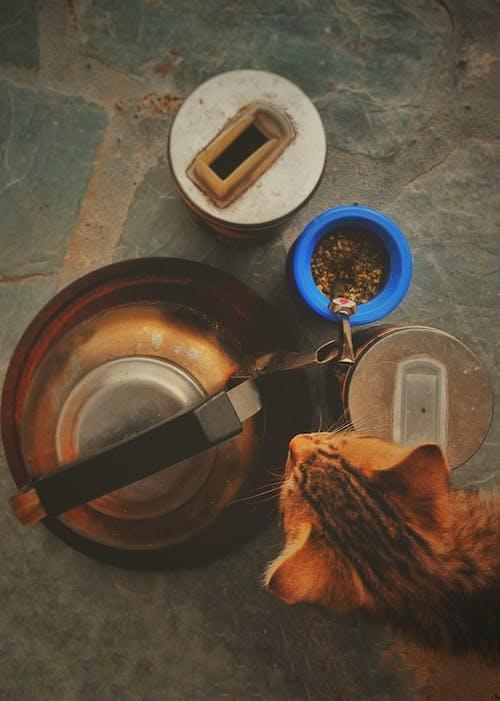 Ảnh lưu trữ miễn phí về ấm đun nước, con mèo, con vật, đồ cổ