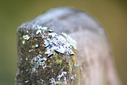 Free stock photo of nature
