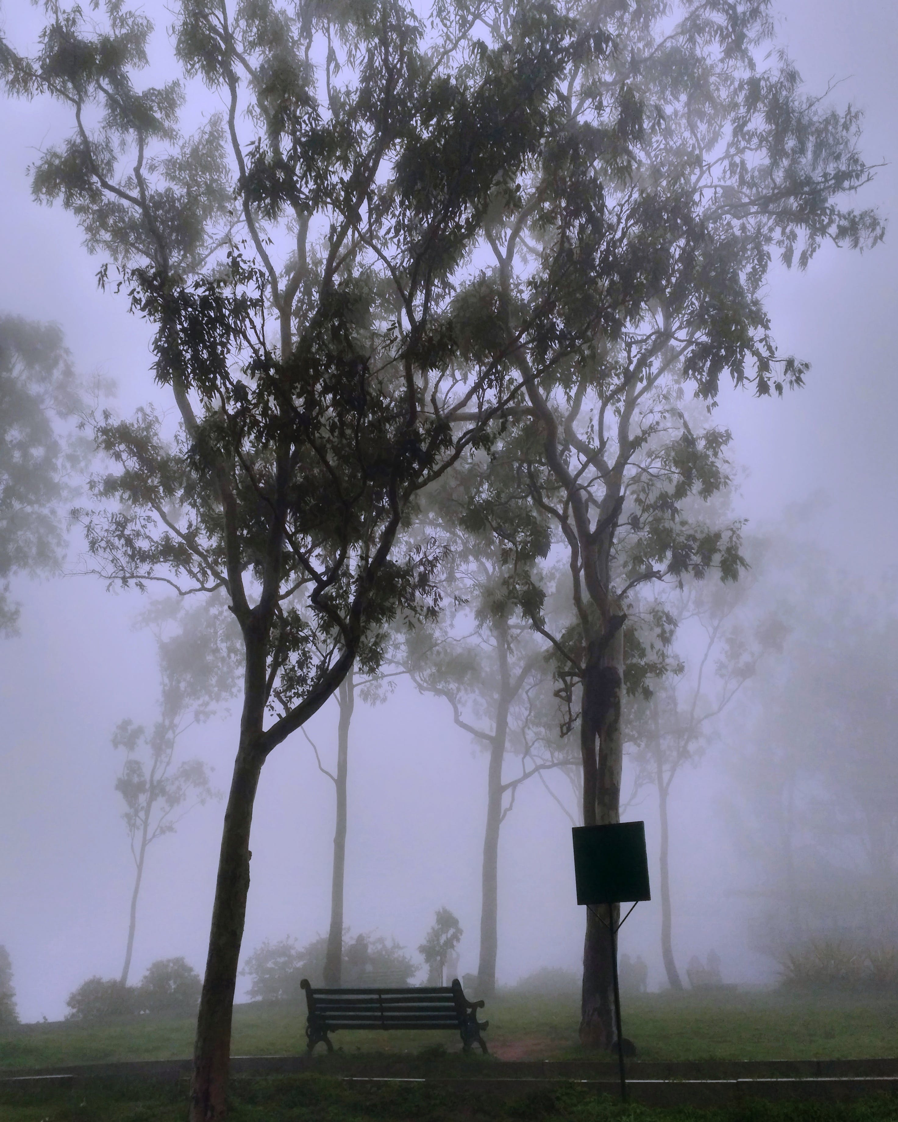 Park Covered With Fog