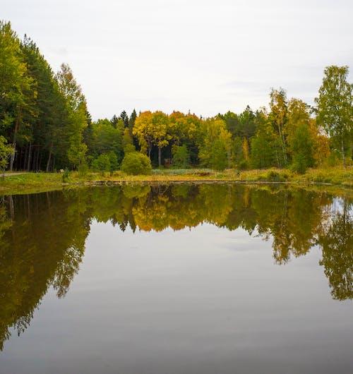 대칭, 대칭적인, 댐의 무료 스톡 사진