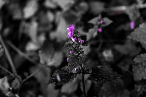 Základová fotografie zdarma na téma fialové květiny, fotografie přírody, HD tapeta, květina tapeta