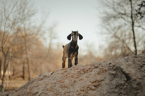 Brown and Black Short Coated Dog on Brown Rock