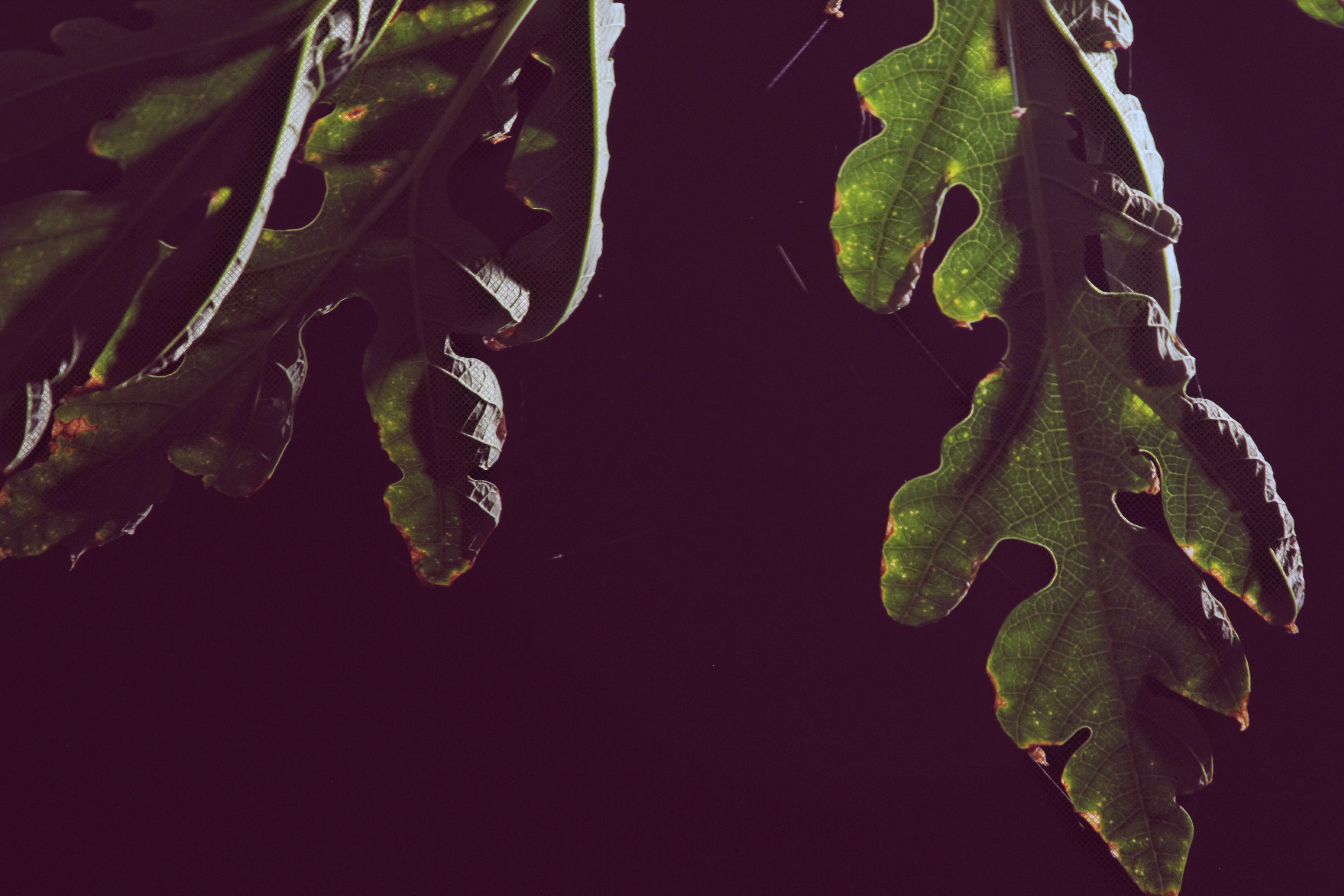 Free stock photo of leaves, nature, night