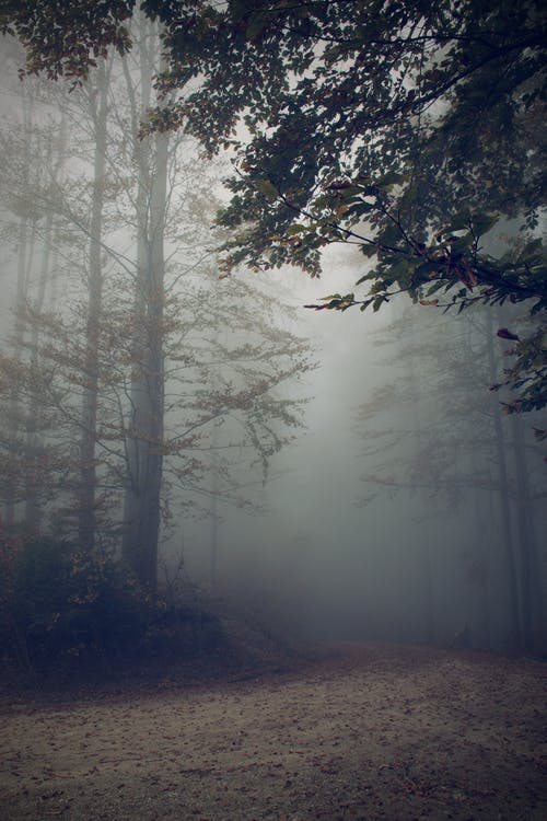 A Gloomy Forest Road