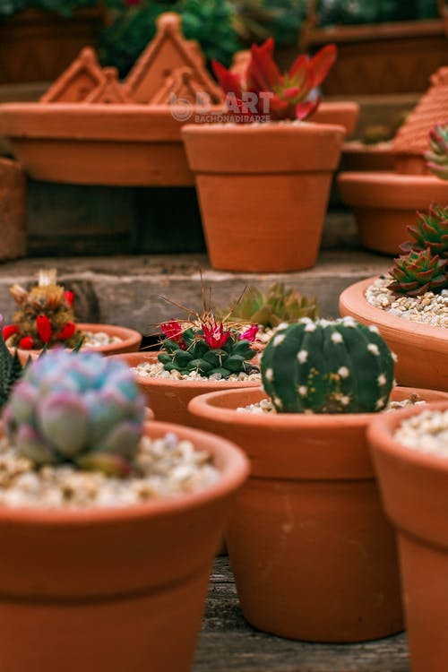 Green succulent plants with green leaves growing in pots on blurred background of hothouse