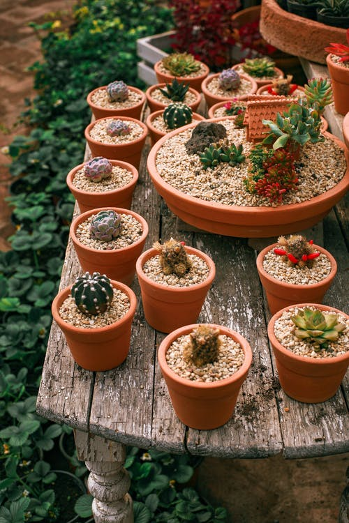 From above of green succulent plants growing in pots on aged wooden table in hothouse