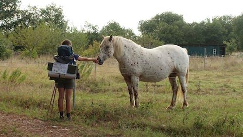 Photos gratuites de amoureux de la nature, animal, animaux