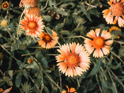 Photos gratuites de bourgeons de fleurs