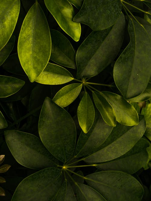 Overhead Shot of Green Leaves