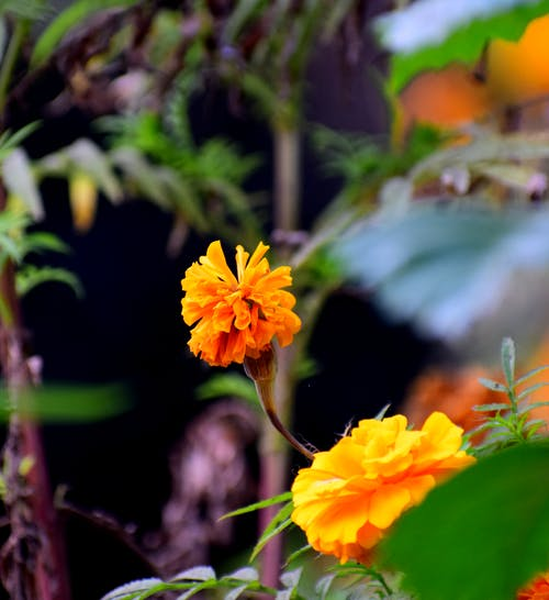 Free stock photo of beautiful flower, natural spring, yellow flower