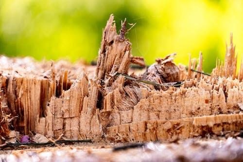 Безкоштовне стокове фото на тему «вирізати дерева»