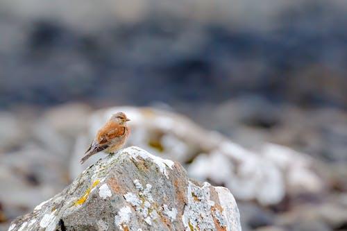 Imagine de stoc gratuită din animal, animale sălbatice, birdwatching
