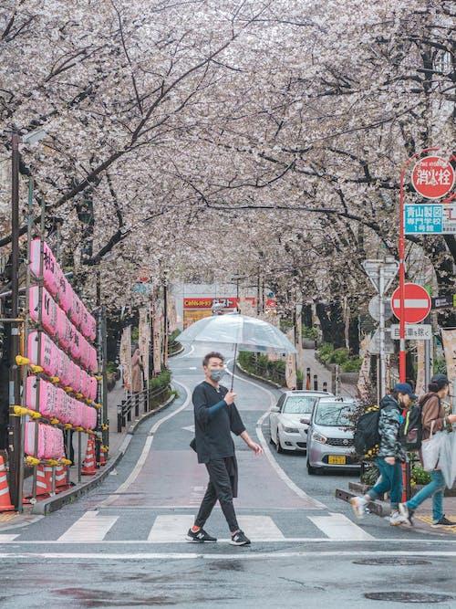アジア人, ホールディング, 交差点の無料の写真素材
