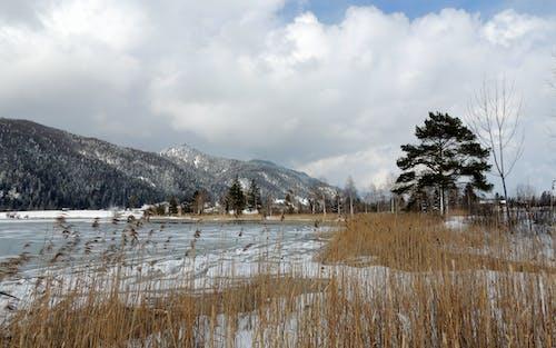 Free stock photo of conifer, frozen lake, mountain view