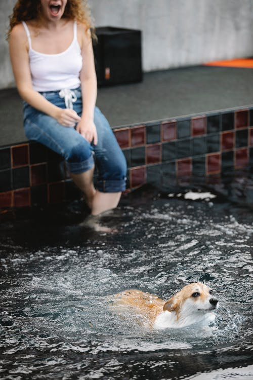Crop excited woman against Welsh Corgi swimming in pool